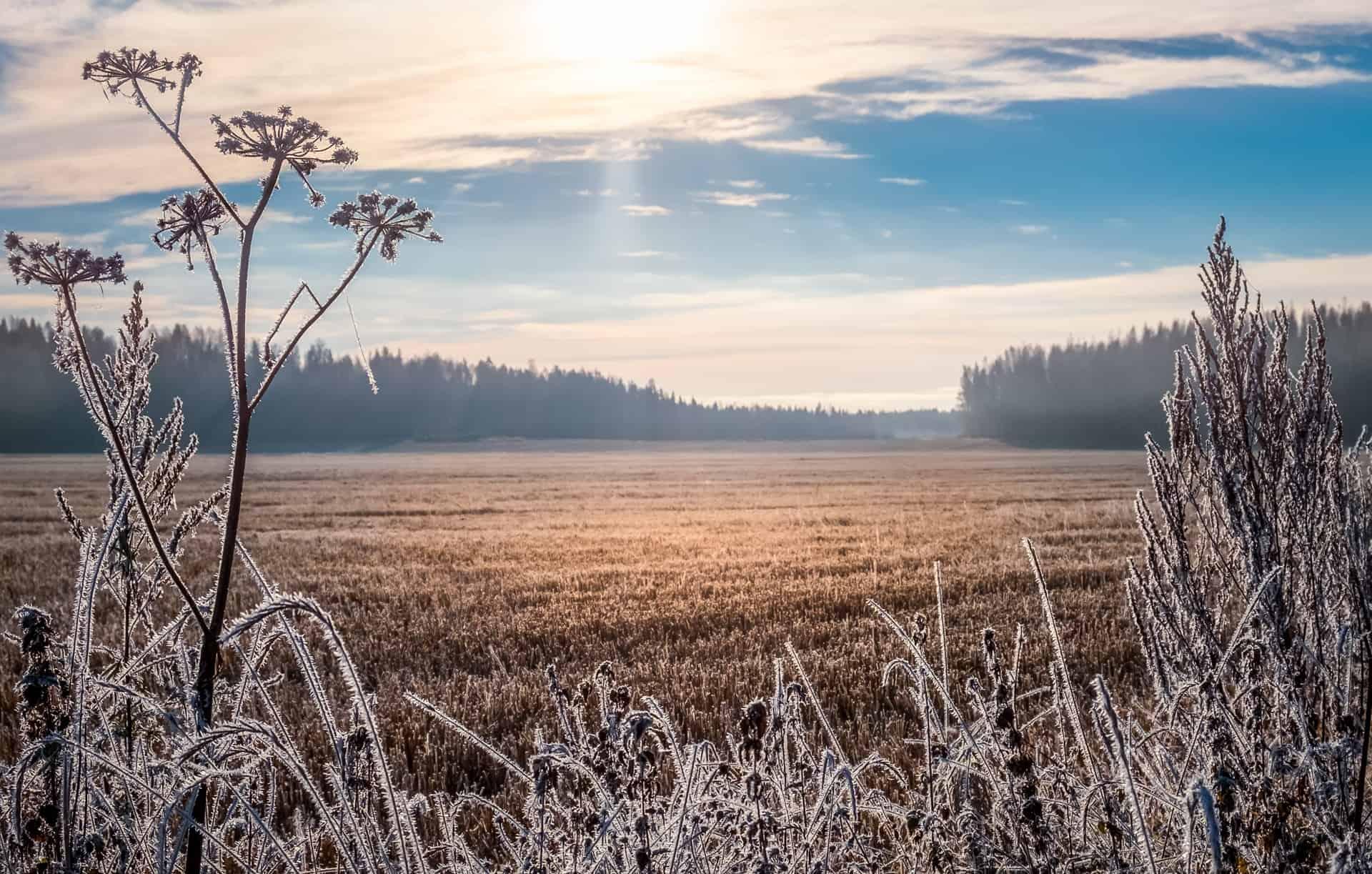frost på en mark